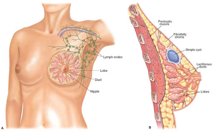 Breast Surgeries